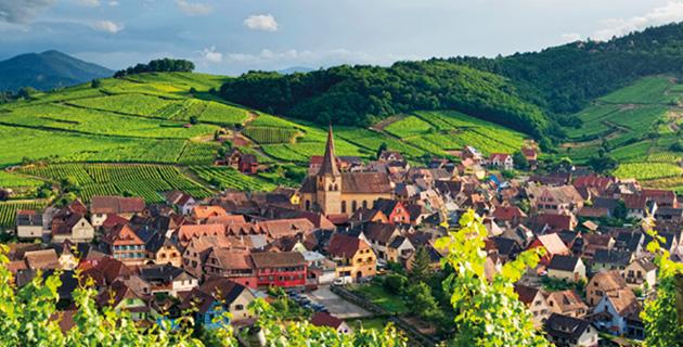 Elsässer Weinbau – Phoenix von der anderen Rheinseite