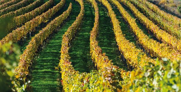 Der Klimawandel – Strategien für den Weinbau