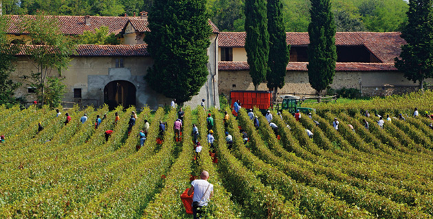 Der Champagner Italiens – Franciacorta DOCG