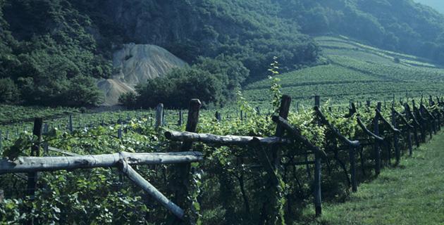 Cantina Terlan – Südtirol auf hohem Niveau