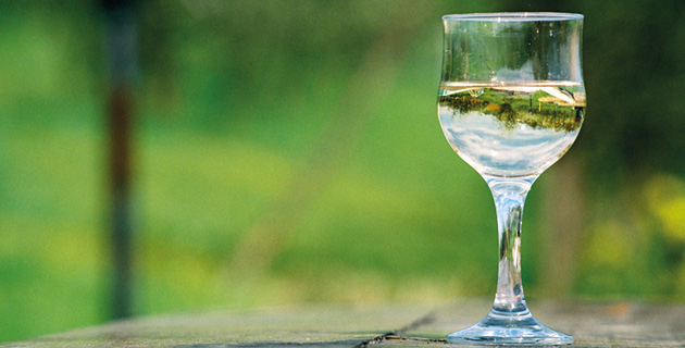 Im Trend – Das Geheimnis hinter veganen Weinen
