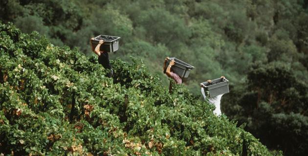 Weinregion Douro – Der Durchstarter Portugals