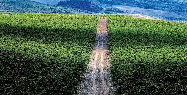 Trends aus Rioja – Traditionell oder modern?