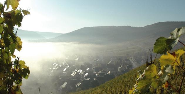 Klettern in Steillagen – Schwerstarbeit im Weinberg
