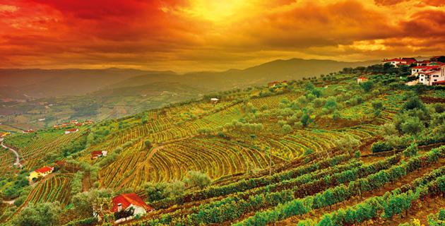 Iberischer Wein – Die Rebschätze Portugals