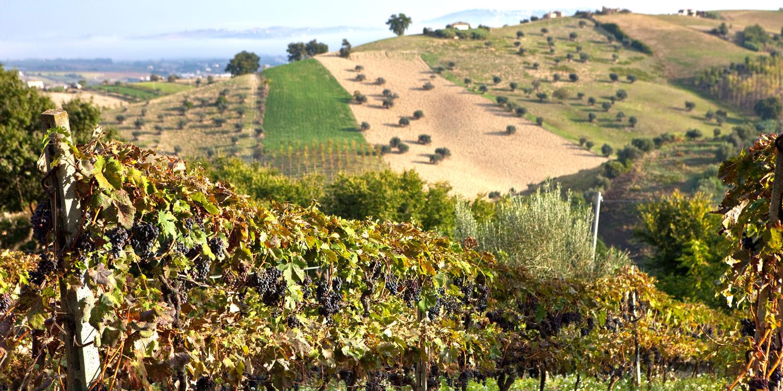 Abruzzen – Wein zwischen Bergen und Meer