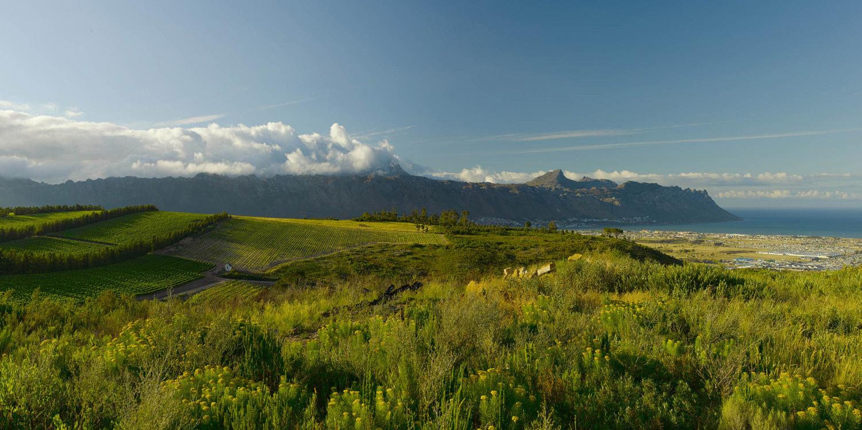 Weinbau am Kap – Bio, Bio und noch mehr Bio