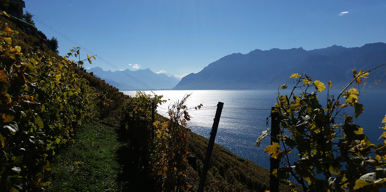 Platin-Loorbeeren für das Waadtland am Genfer See