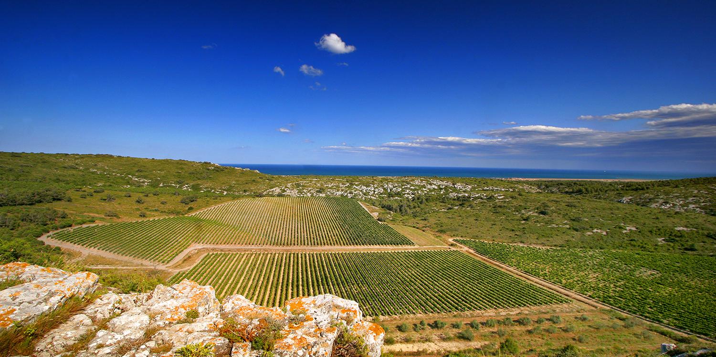 Languedoc-Roussillon – Wein vom Mittelmeer