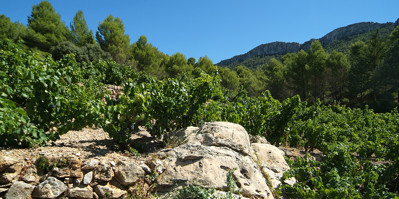 Selection Prämiert: Bestes Bio-Weingut Spanien
