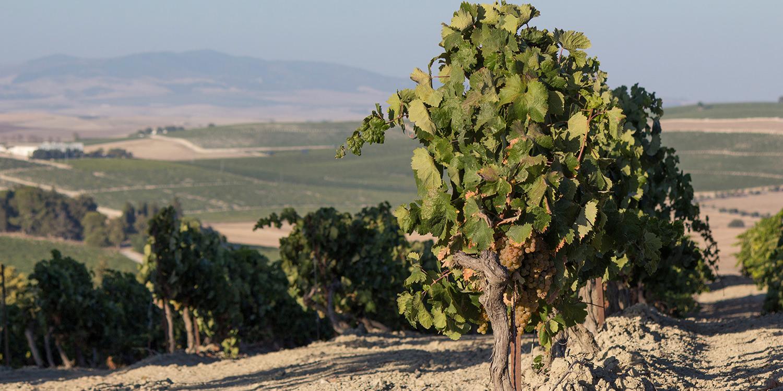 Berühmte Weinlagen – Das Macharnudo Alto