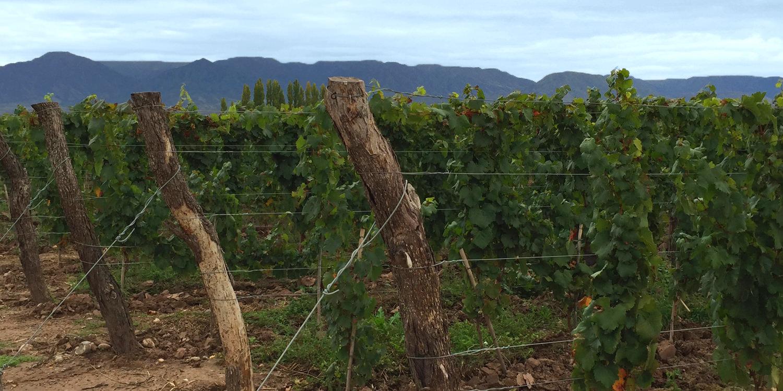 Mendoza – Uco Valley, das neue Napa Valley