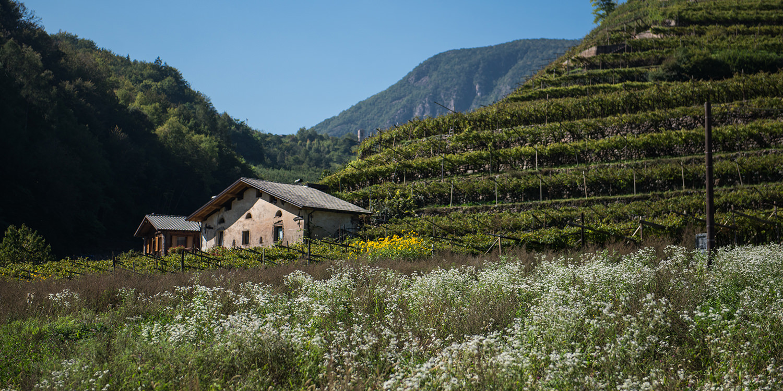 Das Trentino – der schönste Weingarten Europas