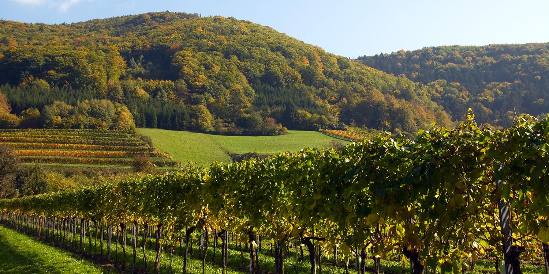 Diese Weinregionen Österreichs sollten Sie kennen
