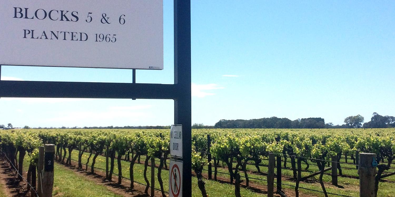 Berühmte Weinlagen – Block 5 & 6, Coonawarra
