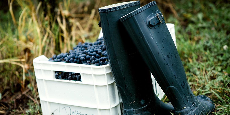 Abwechslungsreiche Spitzenweine aus dem Aargau
