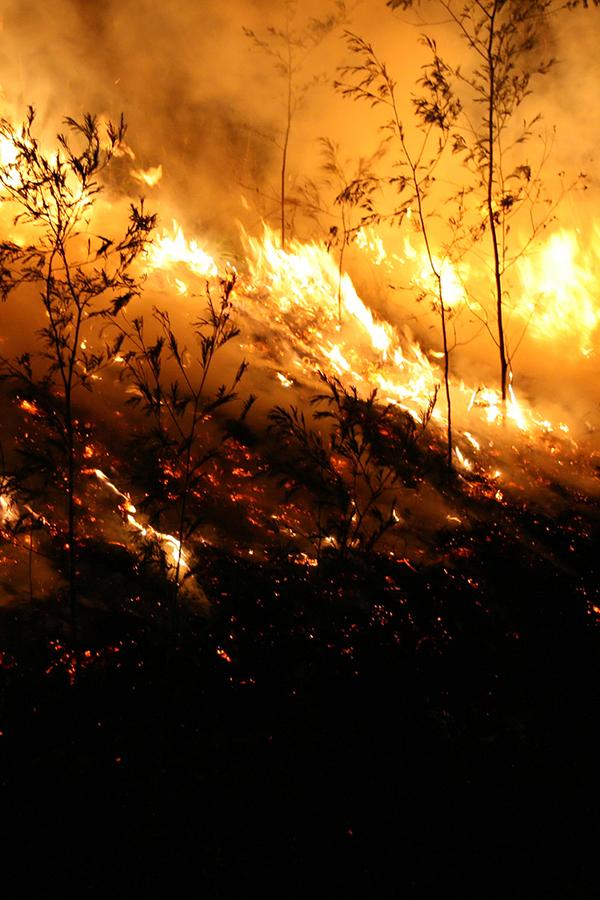 Verheerende Waldbrände gefährden auch kalifornische Weingüter
