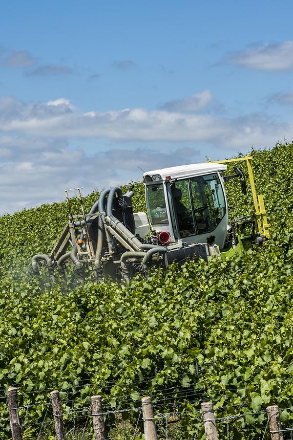 Herbizide sind auch im Rebbau immer noch im Einsatz
