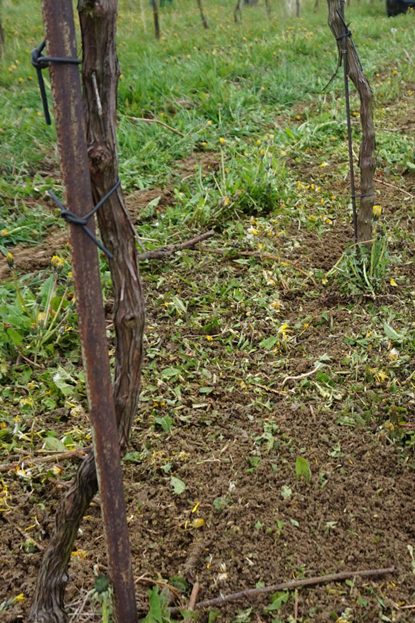 Wasser hat für die Weingewinnung in jeder Hinsicht unschätzbaren Wert.